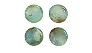 Ibride Yuan Narcisse | 4 Plates