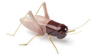 Mambo Unlimited Ideas Fauna Cricket