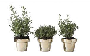 Skultuna Herbs Pot